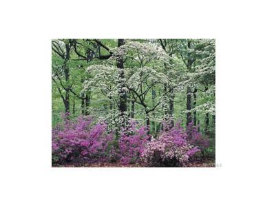 159 Macallister Ridge, Millbrook, AL 36054 - #: 259505