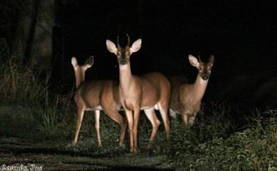 73.33 +\/- Acres Lee County, Marianna, AR 72360 - #: 18023928