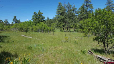 2850 Bull Elk, Pagosa Springs, CO 81147 - #: 758721