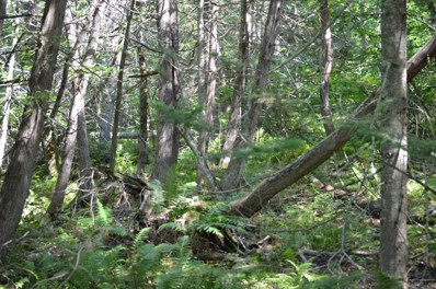 Lot 7 Sand Shed Loop, Amherst, ME 04605 - #: 1450735