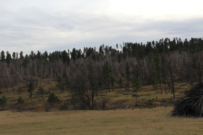 9 Miles Down Farrall Road, Beulah, WY 82712 - #: 58411