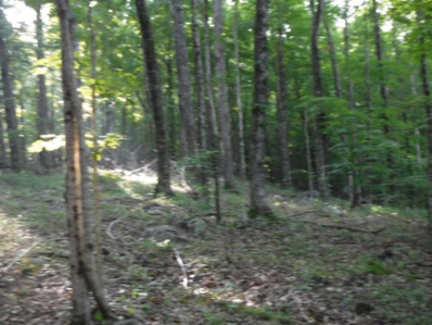 6.71ac Cherokee Drive, Cookeville, TN 38506 - #: 1049416