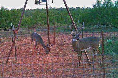 Tbd Hyson Wells Rd, Quanah, TX 79252 - #: 14473862